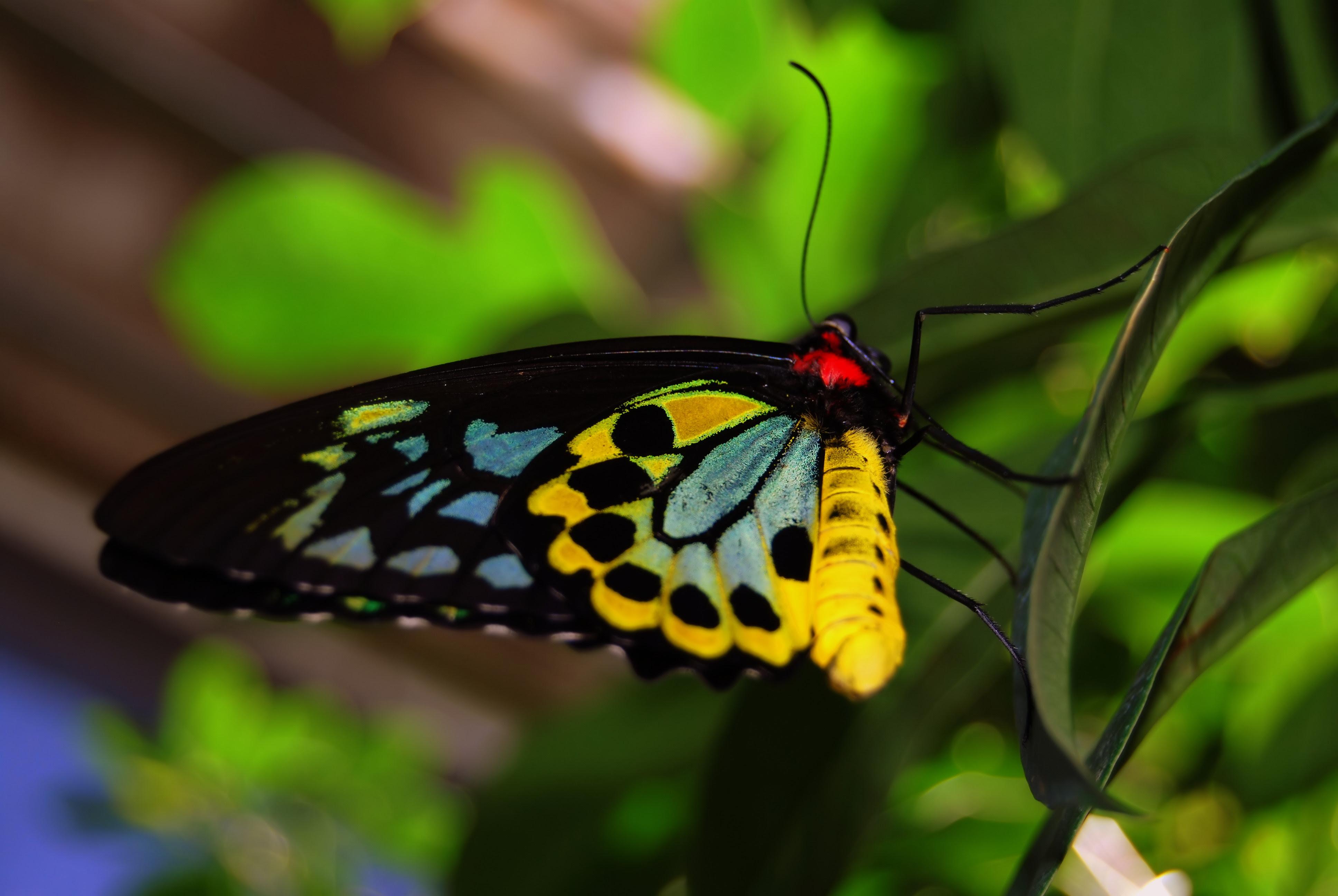Colorful Butterfly Wallpaper - WallpaperSafari