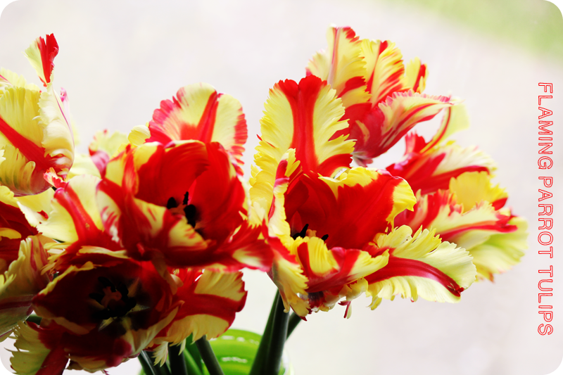 {april} these days | flaming parrot