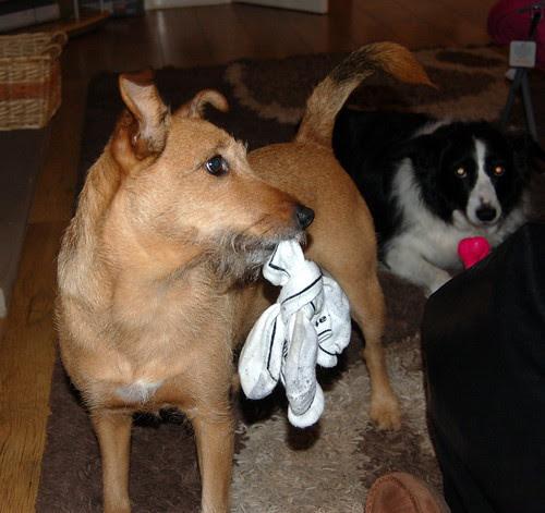 Got socks?