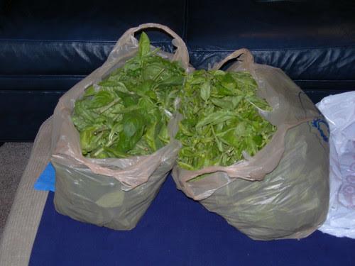 2009-09-12 Pesto Ingredients (6)
