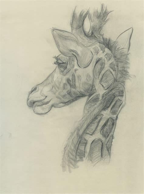 heather branscom animal drawings