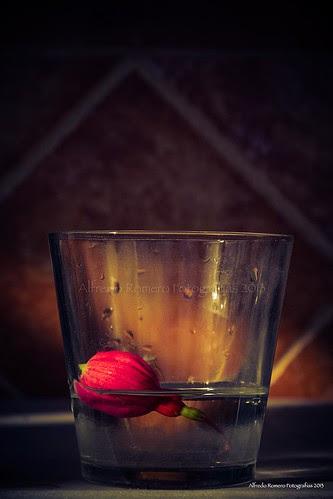 Toma mi vaso by Alfredo Romero Fotografias 