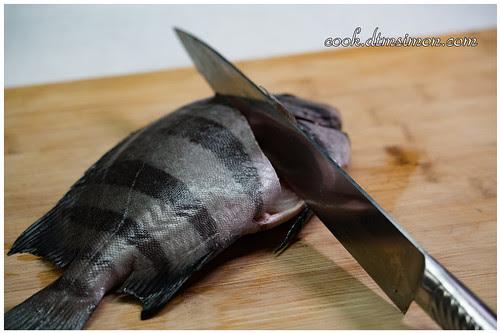 橫帶石鯛2吃04.jpg