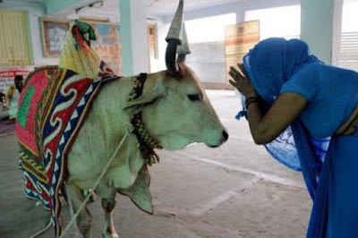 India: Human Rights Watch wants 'cow vigilantes' prosecuted for barbaric attacks on Muslims and Dalits