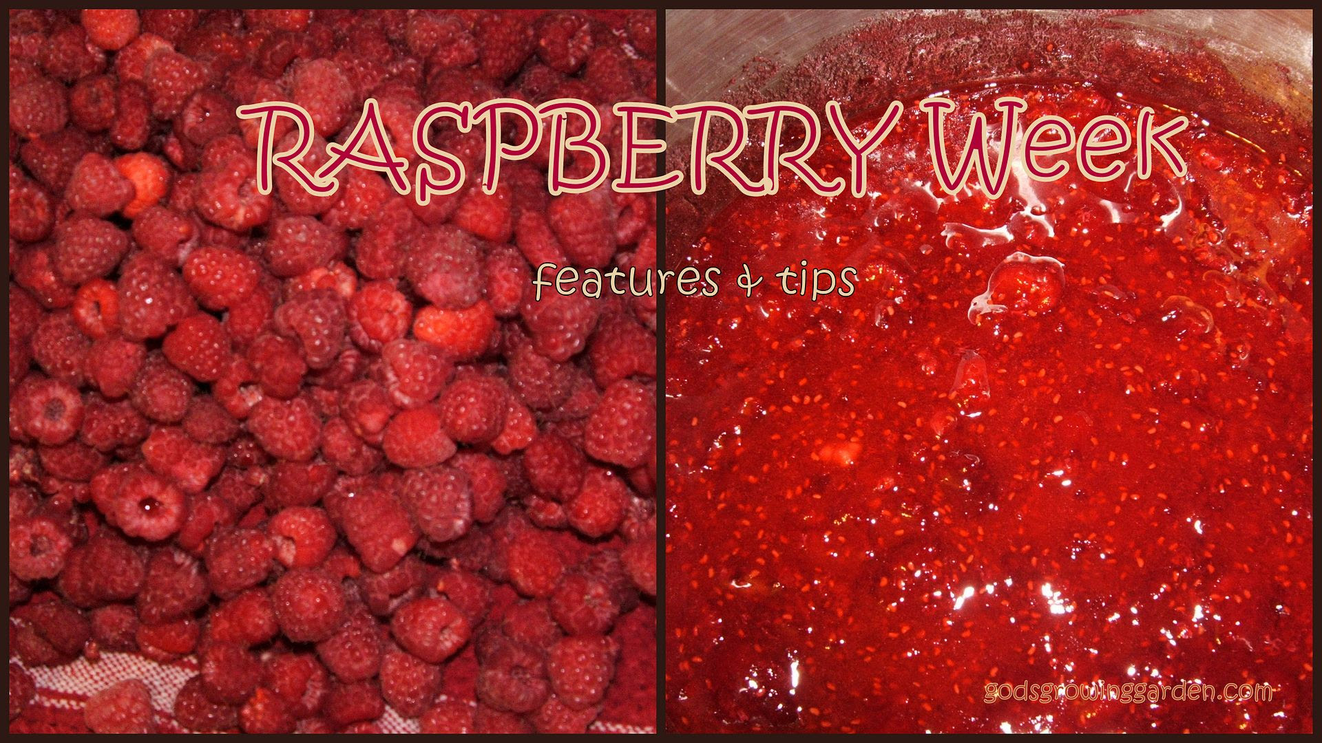 RASPBERRY by Angie Ouellette-Tower for godsgrowinggarden.com photo BlogStuff_zpsae13f181.jpg