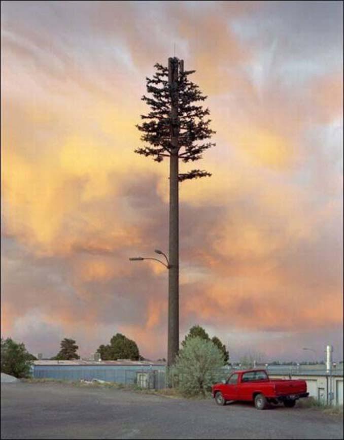 Νομίζετε πως πρόκειται για ένα δένδρο; Κοιτάξτε πιο προσεκτικά... (12)