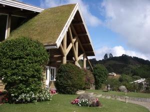 Telhado-Verde-Escolha-a-Planta-CorretaFOTO7