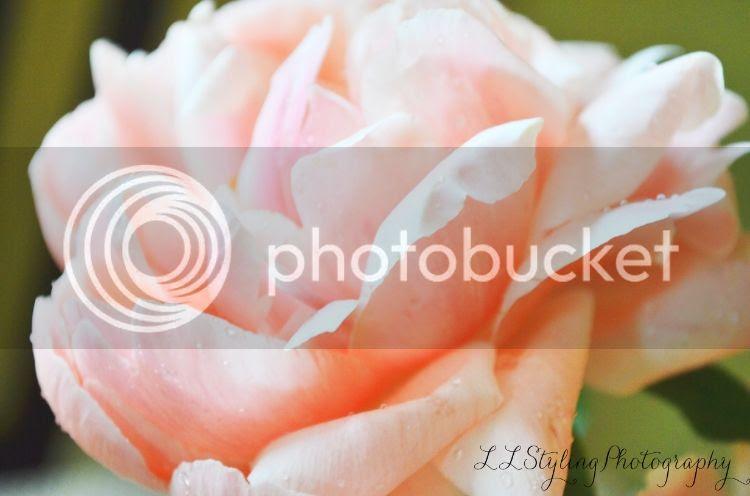 photo d552106f-5116-4994-829d-45bd904644de_zps965f5669.jpg