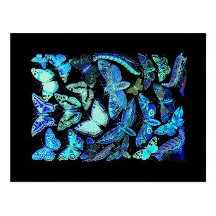 Spooky Blue Black Butterfly Moth Postcard
