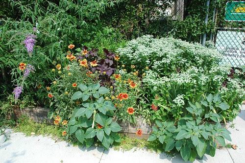 Entrance Plantings