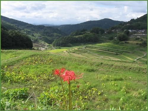 Tanada 01 higanbana till 05