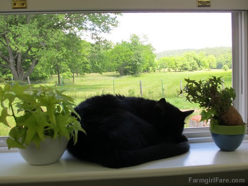 (29-19) View of the hayfield from the kitchen sink, past the naughty kitty - FarmgirlFare.com