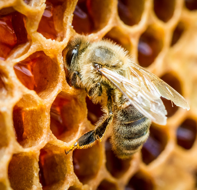 The Origin Of The Phrase Mind Your Own Beeswax