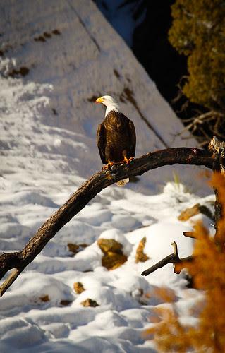 Bryce National Park-3.jpg