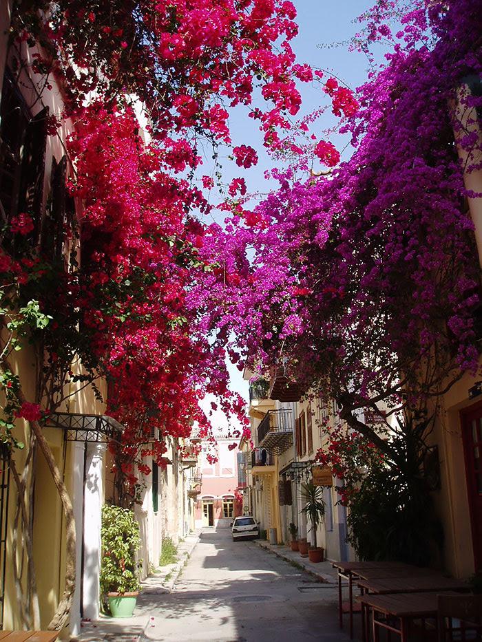 calles-arboles-flores (9)