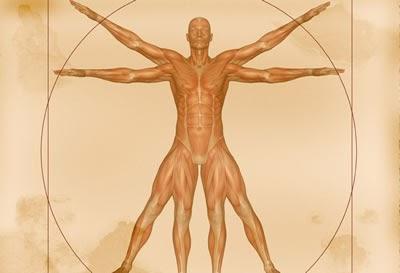 Faça um espetacular curso de anatomia online
