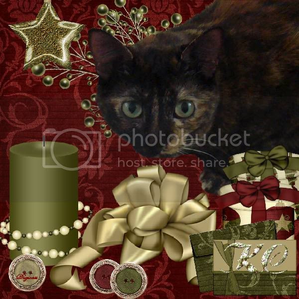 Holly Daze,Torti Cat,Domestic Cat,Happy Holidays,Holiday Glitter