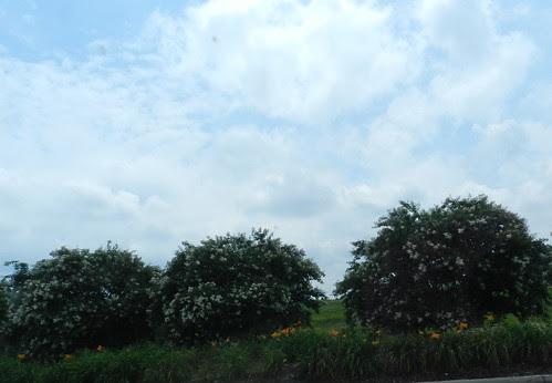 todayflowersDSCN8899