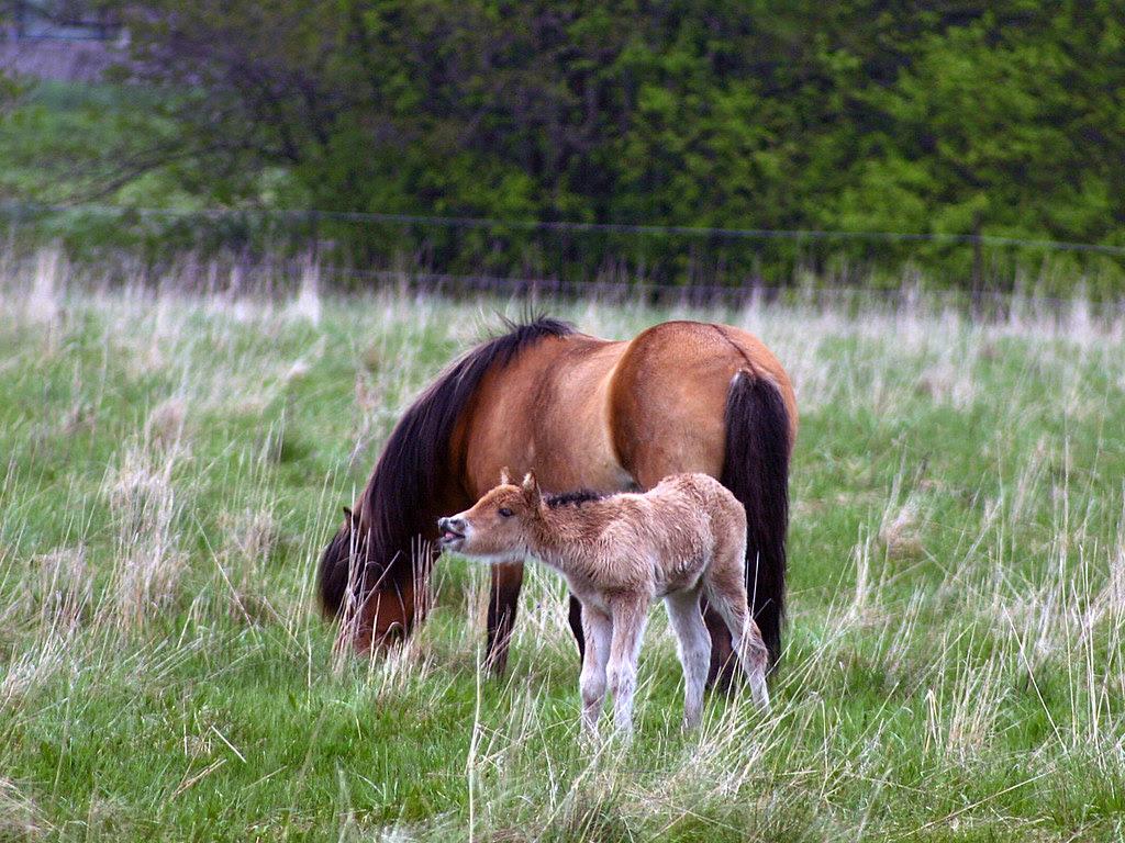 horse & foal