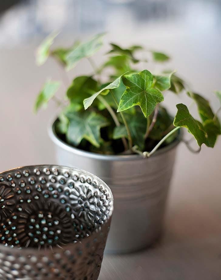 cây trồng phòng khách