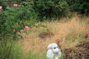 bunny hiding (640x427)