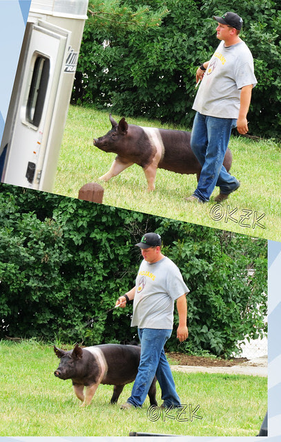 PigCollage2