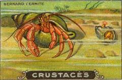 crustacés 10