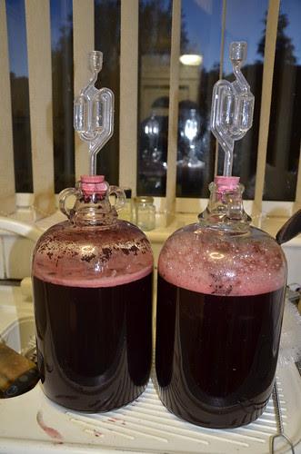 elderberry wine Nov 13