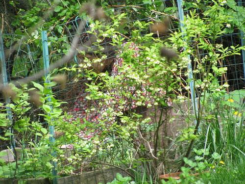 Sara in the Garden