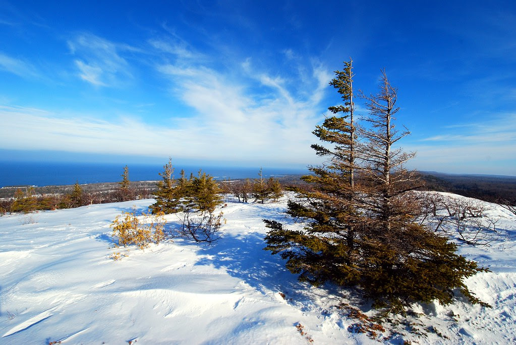 Pines on a field of snow, overlooking a blue Lake Superior.