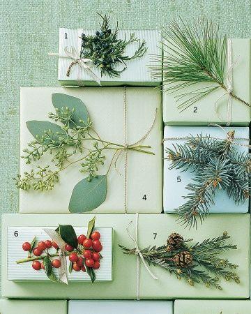 1. Eastern Juniper  2. White Pine  4. Eucalyptus  5. Blue Spruce