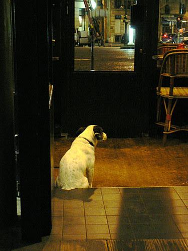 chien au grand café de la poste.jpg