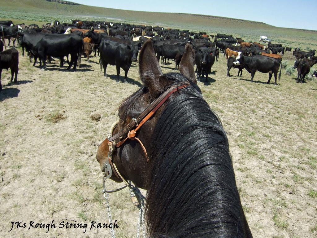 Holdin' Herd