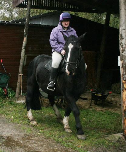 'Rebel' - Barend Riding Stables