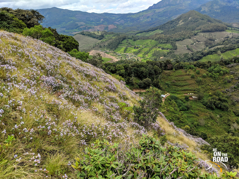 The Neelakurinji slope and the tea estates