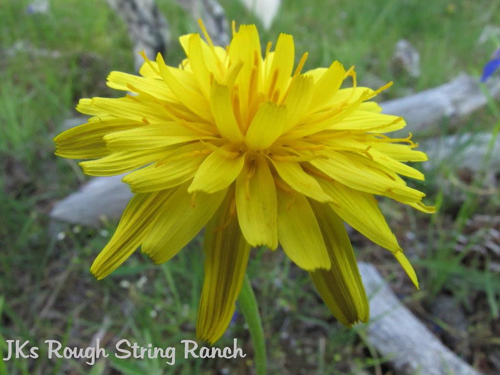 Yellow Makes You Smile