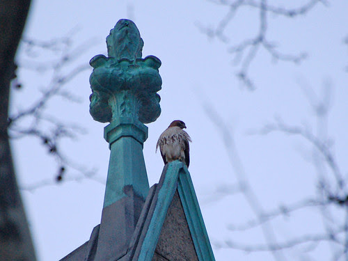 Red-Tail and Finial