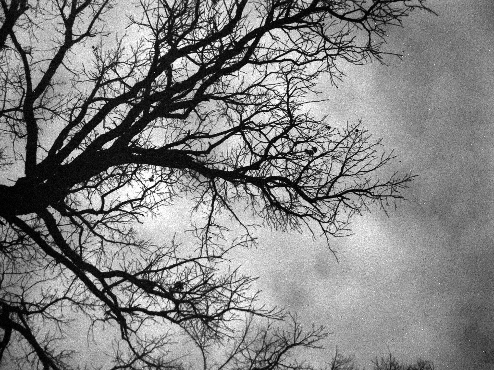 Troys Photos Nature Art Black And White Tree In Winter