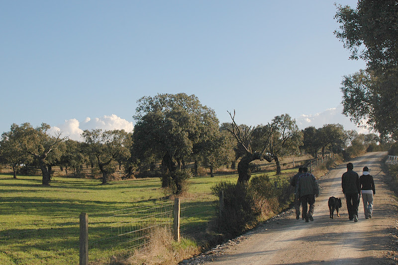 Camino al Arroyo Añovero