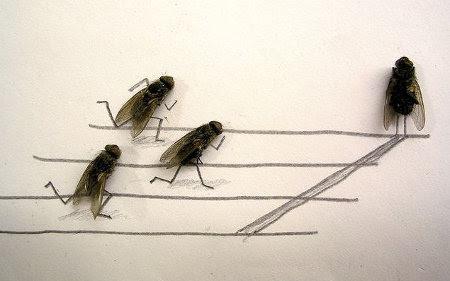 flies-1