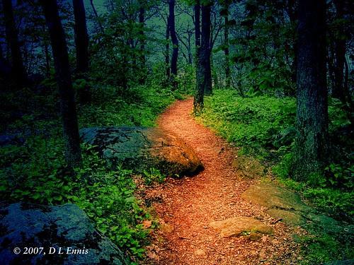 Fantasy Forest Trail