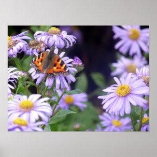 Beautiful Butterfly On Flowers