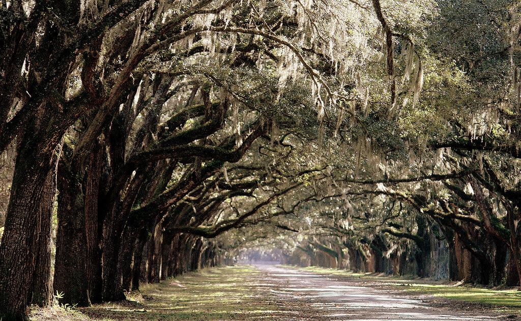 Wormsloe Plantation, Savannah, GA - 2