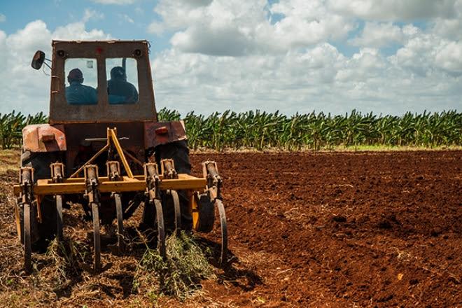 Los agricultores cubanos tienen el compromiso de sembrar 139 mil hectáreas de arroz en la campaña de frío, período que iniciará oficialmente el próximo día 15, con un peso muy grande en Granma, encargada de sembrar 38 mil ha entre las dos empresas agroindustriales de granos del territorio.