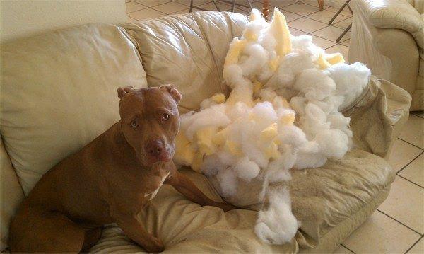 deus-criou-cachorros-3-roendo