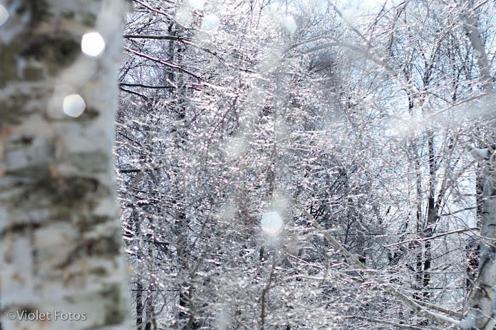 Winter_110203-6