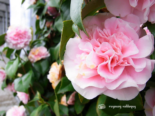 Ricoh_CX1_Sample_02 (by euyoung)