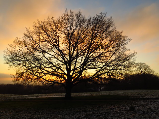 Sunrise on Tumulus Field