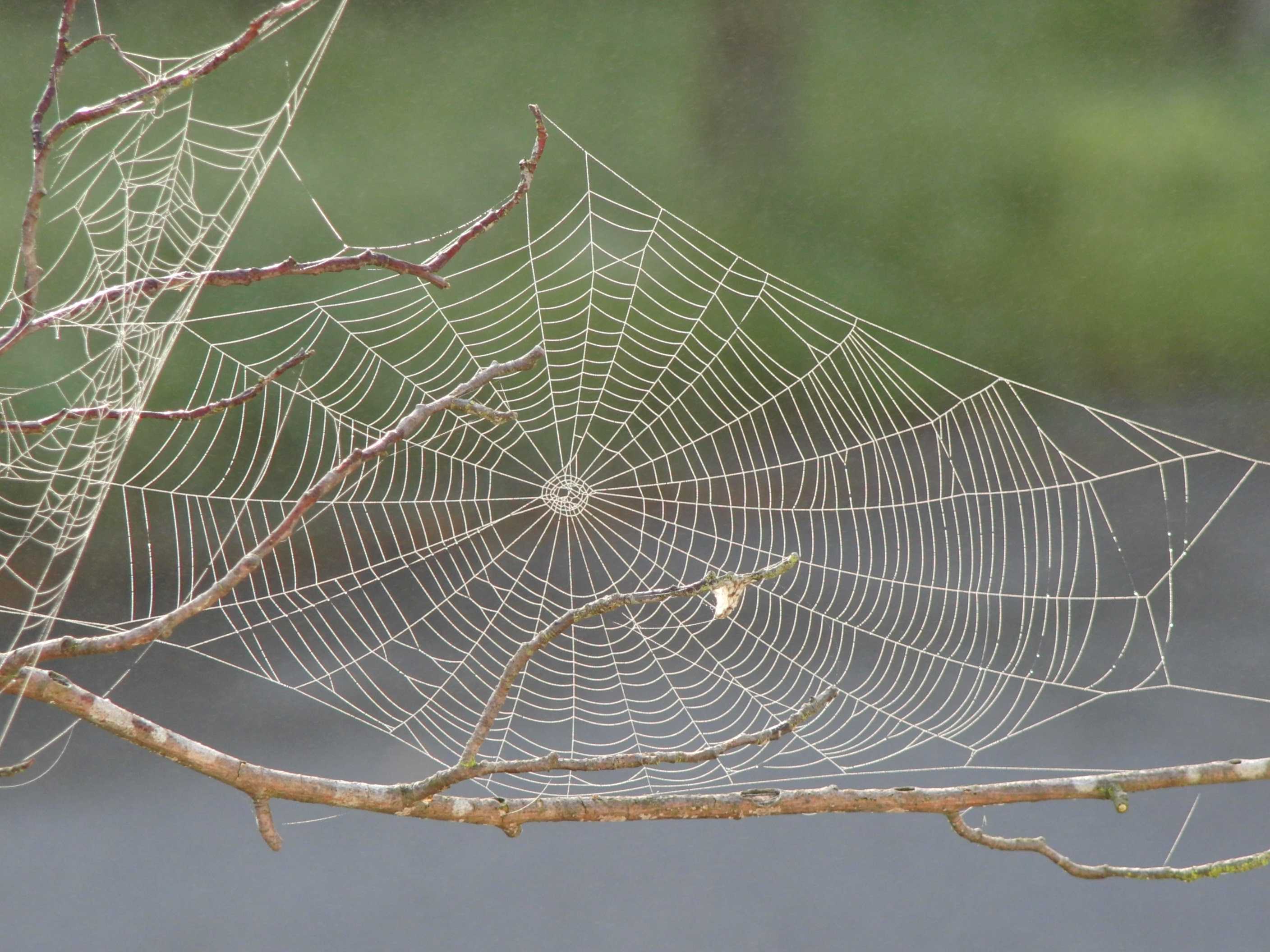 Forget Plastic Spider Silk Could Be Super Material Of The Future Wcai