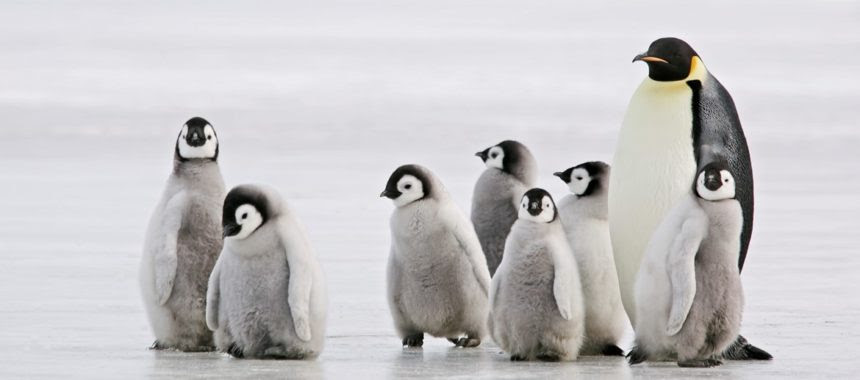 Walk Like a Penguin!
